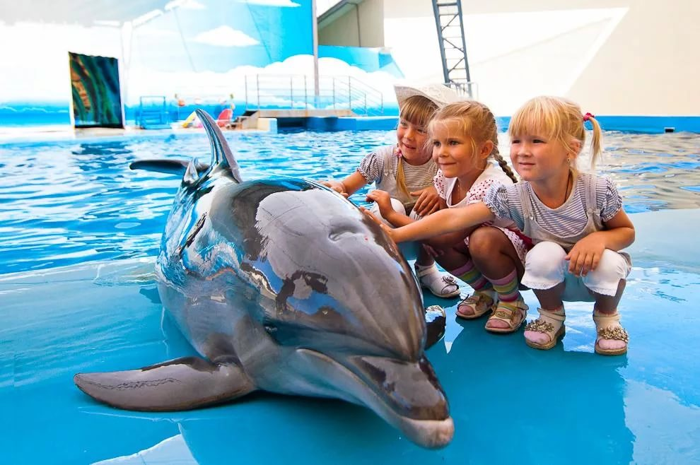 Посетите дельфинарий