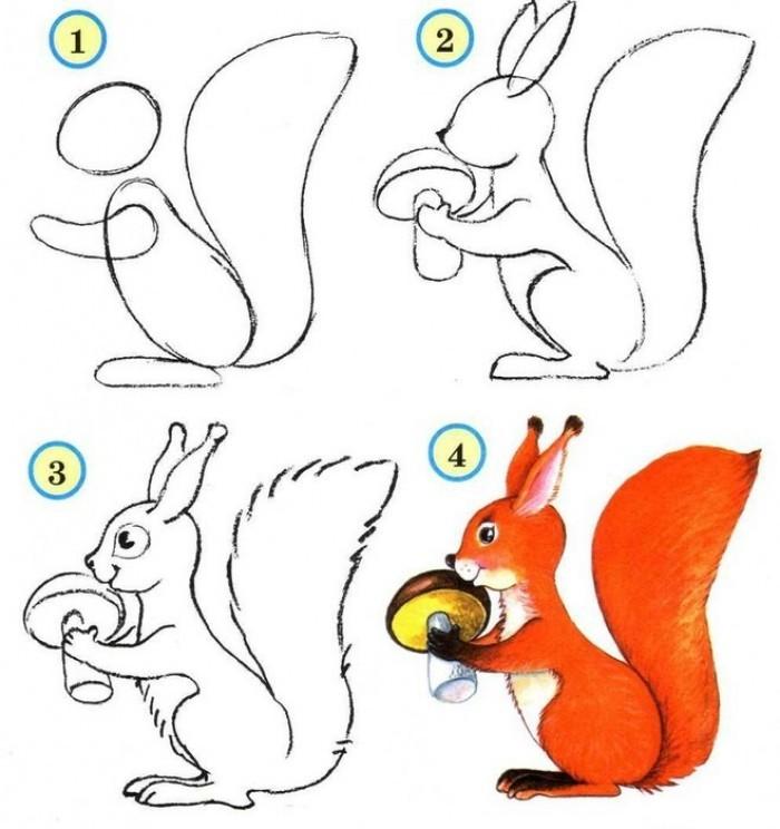Рисование животного поэтапно (белка)