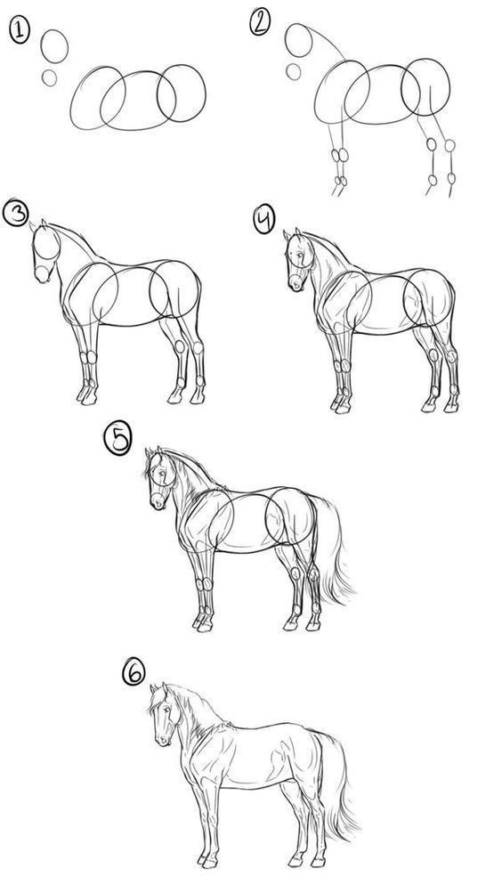Рисование животного поэтапно (лошадь)