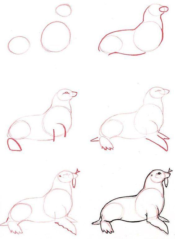 Рисование животного поэтапно (морской котик)
