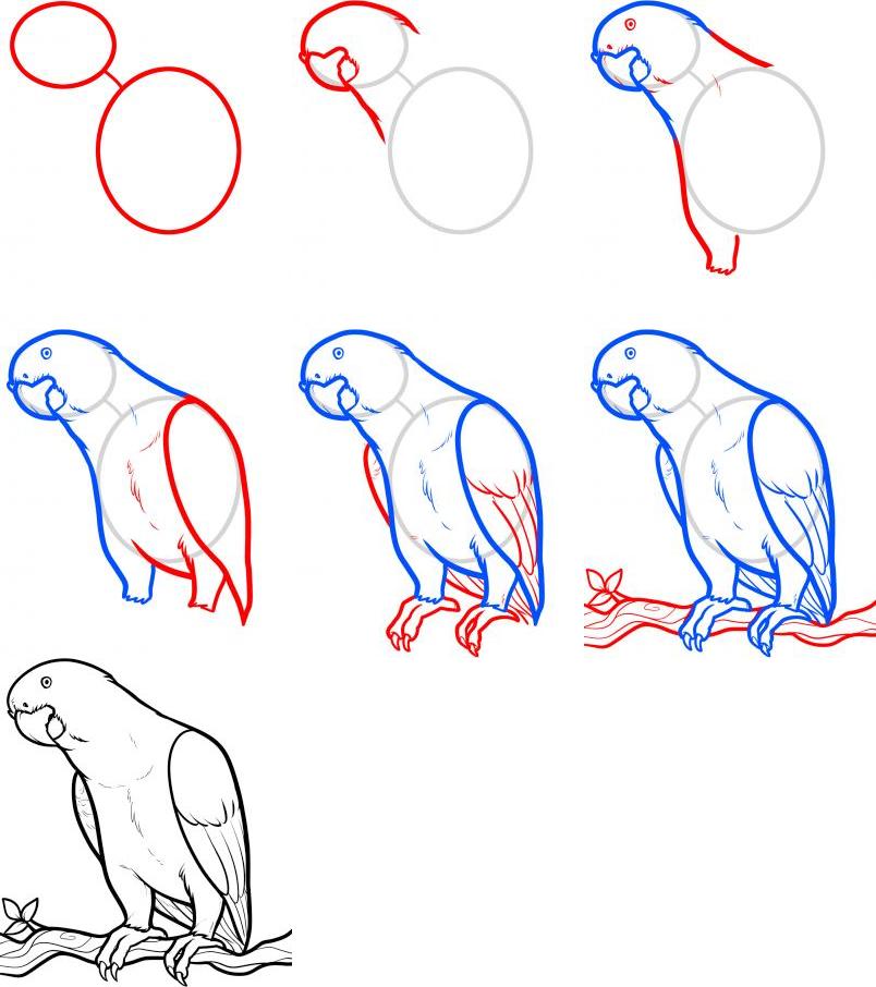 Рисование животного поэтапно (попугай)